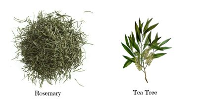 rosemary-tea-tree