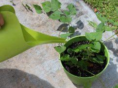 Φτιάξτε φυσικό λίπασμα για τα φυτά σας με 4 υλικά!