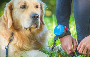 Λουρί για το σκυλάκι σας που θα κάνει τη ζωή σας πιο άνετη