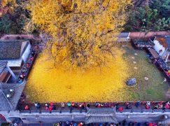 Ένα διαφορετικό «χαλί» στην Κίνα