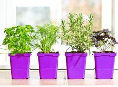 Πώς να καλλιεργήσετε τα δικά σας βότανα, ακόμα κι αν μένετε σε μικρό σπίτι
