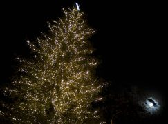 Το ψηλότερο φυσικό χριστουγεννιάτικο δέντρο φωταγωγήθηκε στα Τρίκαλα!