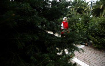 Το «χωριό των Χριστουγέννων» βρίσκεται στη Χαλκιδική