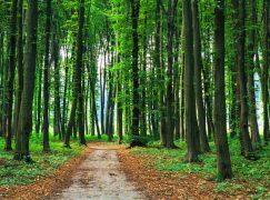 Δάσος με 50 εκ. δέντρα αναδημιουργούν οι Βρετανοί!