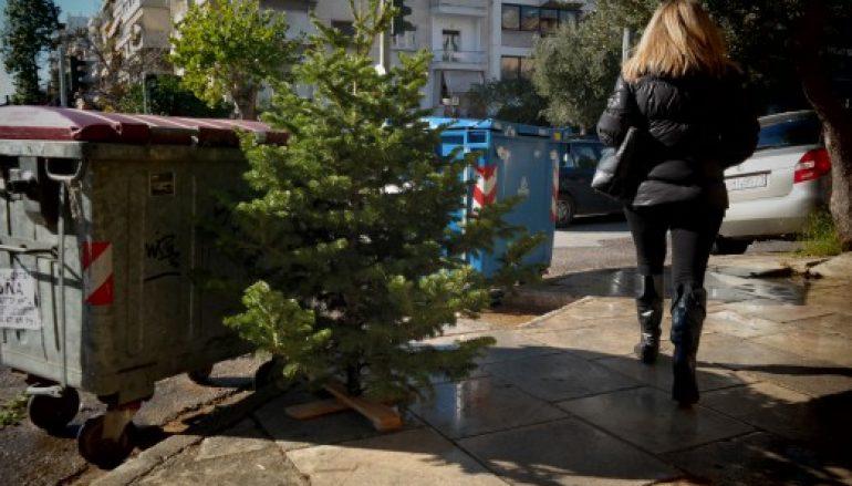 Tι πρωτοποριακό θα κάνουν στην Θεσσαλονίκη με τα άχρηστα χριστουγεννιάτικα δέντρα
