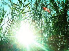 Φυσικό φως: Η θεραπεία της λιακάδας