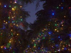 Η Χαλκιδική ανάβει το πρώτο Χριστουγεννιάτικο δέντρο της Ελλάδας για το 2019