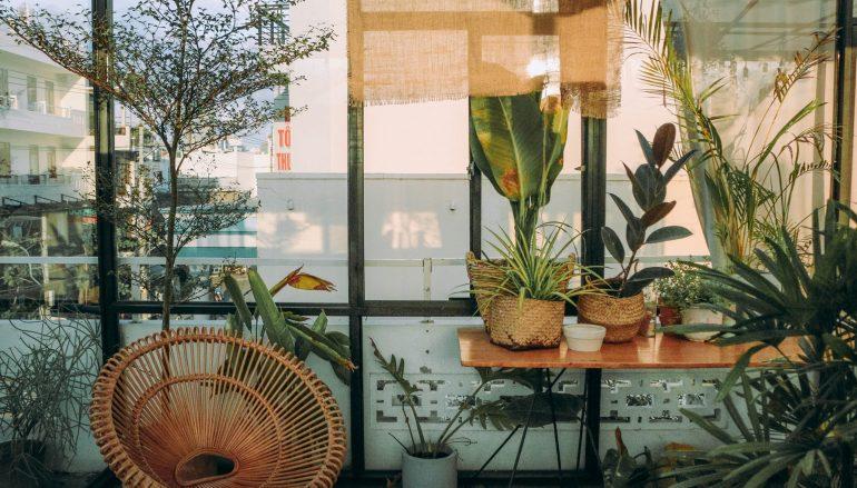 Αυτά τα φυτά θα δώσουν ανάσα και ζωή στο σπίτι σας
